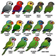 Birdorable parrots, conures & amazons