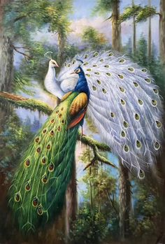hand-made oil painting,decoration,murals… – Animal Drawing Bird Paintings On Canvas, Animal Paintings, Animal Drawings, Painting Prints, Peacock Images, Peacock Pictures, Peacock Wall Art, Peacock Painting, Swan Painting
