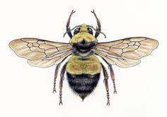 Bee Scientific Illustration | www.pixshark.com - Images ...