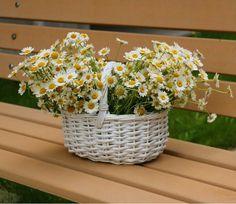 Sunflowers And Daisies, Wild Flowers, Daisy Flowers, Daisy Love, Daisy Daisy, Bellis Perennis, Goddess Of Love, Yellow Roses, Amazing Flowers