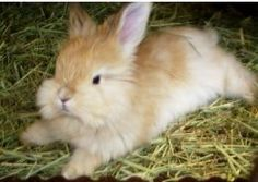 Growing Your Own food for rabbits (as opposed to your own rabbit food...yum!)