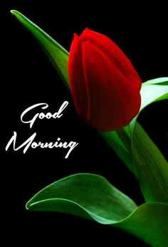 Good Morning Picture Messages, Good Morning Friends Images, Good Morning Greeting Cards, Good Morning Flowers Pictures, Happy Good Morning Quotes, Good Morning Beautiful Pictures, Latest Good Morning Images, Good Morning Roses, Good Morning Greetings
