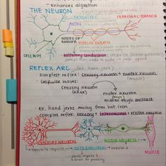 "universityandme: ""6:52pm: neurons  """