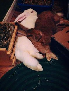 Chilling bunnies