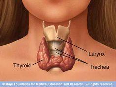 Wat te doen bij schildklierproblemen?  http://www.evitalien.nl/wordpress/?p=385