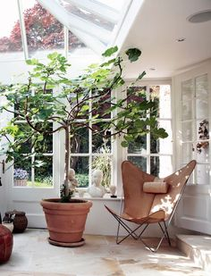 simply with plants. modern greenhouse like room with plants. / sfgirlbybaymodern greenhouse like room with plants. Decoration Inspiration, Interior Inspiration, Outdoor Spaces, Outdoor Living, Modern Greenhouses, Indoor Trees, Large Indoor Plants, Big Plants, Room With Plants