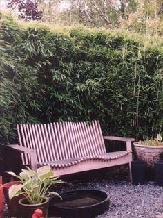 Bild från Hansson och Hanssons bok om gräs och bambu.