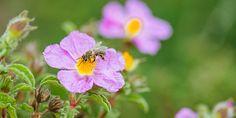 17 φυτά που προσελκύουν τις μέλισσες στον κήπο μας | Τα Μυστικά του Κήπου Plants, Plant, Planets