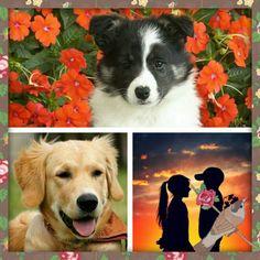 Cute pretty happy dogs