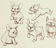 French Bulldog Cartoon, French Bulldog Drawing, French Bulldogs, Animal Sketches, Animal Drawings, Cartoon Drawings, Cartoon Art, Sketch Free, Bulldog Tattoo