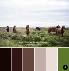 A horse-inspired color palette