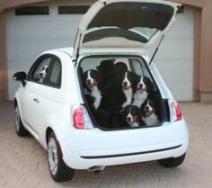 Peter Noll's Nani & Kiki answer the age old question, how many will fit in a Fiat?