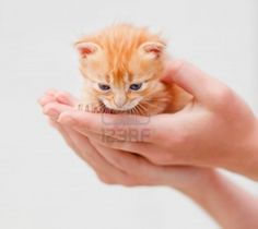 small kittens - Google Search