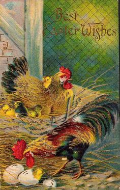 Anything roosters and hens: I'm into it.