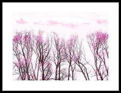 Lavender Autumn Framed Print by Hal Halli Bare Tree, Hanging Wire, Fine Art America, Lavender, Framed Prints, Autumn, Wall Art, Artist, Nature