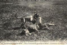 """""""Perro ambulancia"""" asistiendo a un herido en la Gran Guerra (1914)"""