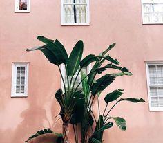 극락조 + 온더사이드 프리미엄화분 SET : PLANT ODD