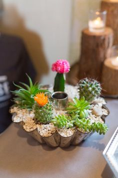 DIY planter with cacti #cactus #plants #planter #diy #design #decor #flowers