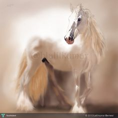 Heaven Horse - Digital Art by Lalit kumar Beniwal in My Projects at touchtalent