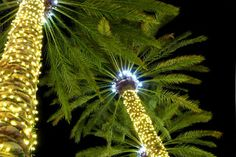 Lights in Palm Tree - Santa Monica - California Christmas