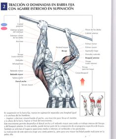Sin mas vueltas, les posteo distintos ejercicios para cada grupo muscular, al final del post agrego rutina para volumen o hipertrofia Ejercicios de pe...