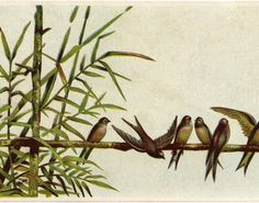 This is a cute Birds on Branch Clip Art Image! Shown above is an old Advertising Trade Card, although there is no branding on this one.