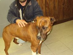Meet Choper/Sponsored a Petfinder adoptable Boxer Dog | Mount Vernon, IL | We are receiving many dogs and puppies daily and each animal here will have a VERY LIMITED TIME....
