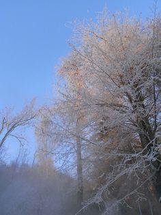 季節外れですが、樹氷コレ?