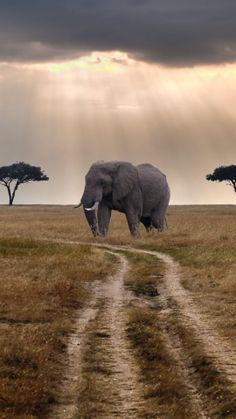 Elephant_in_Masai_Mara