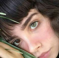 ☆ pinterest: birdie ☆ < heterochromia eyes brown and pale light green