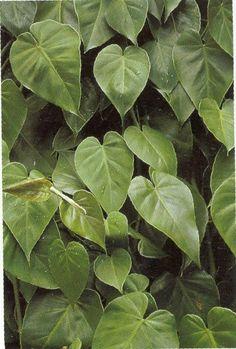 Jardim da Terra: DICA DO DIA: 17 Plantas para montar um jardim vertical