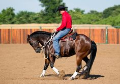 Training Tip of the Week:  Put your horse in reverse