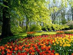 field of tulips under tree