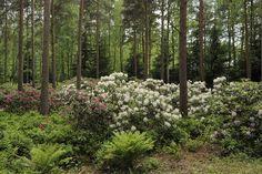 Forest Garden, Woodland Garden, Garden Inspiration, Garden Ideas, Green Garden, Gardening, Planting, Perennials, Greenery