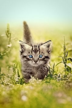 Pretty Blue Eyes   # Pinterest++ for iPad #