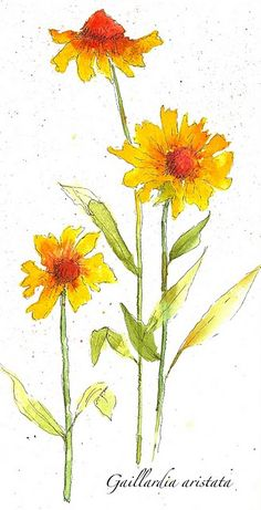 watercolor flowers. great blog with online classes for everything artsy.