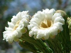 Springtime in the Sonoran Desert Images   Signs of Spring