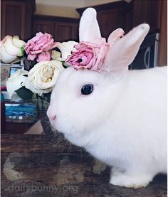 Bunny Sniffs and Models the Flowers 2