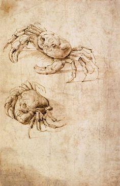 Leonardo Da Vinci >> Etudes de crabes  |  (huile, reproduction, copie, tableau, oeuvre, peinture).