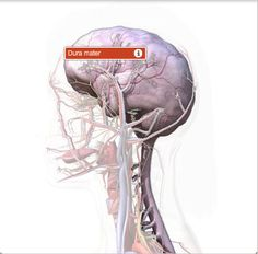 Benefits of CranioSacral Therapy