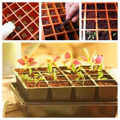 Now's the time to start your spring garden seeds. Not sure how to begin? We've got you covered with the right supplies and know-how to get you growing in no time.