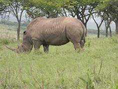 Tala Game Reserve Kwa-Zulu Natal South Africa Kwazulu Natal, Wild Life, South Africa, Elephant, African, Animals, Animales, Animaux, Animais