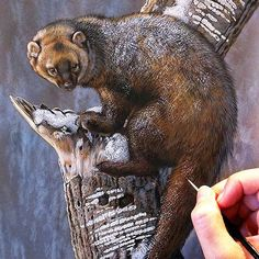 American Fisher painting - watercolor on board with sterling silver Rebecca Latham  Hope you enjoy! ..share if you like. #wildlife #watercolor #art #animals #painting #miniature #artist #miniatureart #realism #animallovers #bear #americanfisher #fisher #fineart #wildlifeart #naturalism