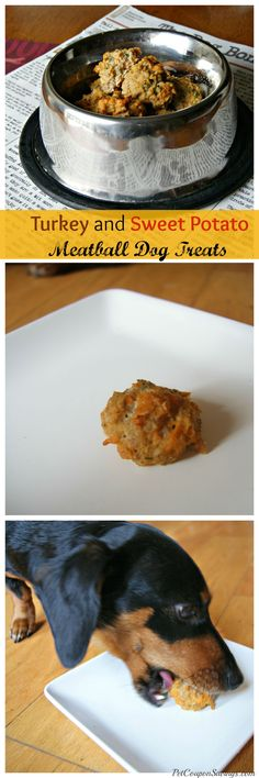 Homemade Turkey and Sweet Potato Meatball Dog Treats. Perfect for Thanksgiving!