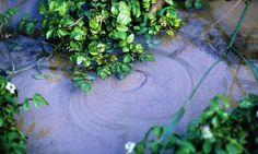 Villafranca, noto per la sua ricchezza in fontanili e risorgive, in cui l'acqua mantiene temperature pressoché costanti per gran parte