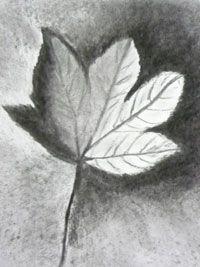 Herfstblad licht donker