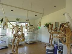 Parrot Stand, Bird Stand, Diy Bird Cage, Bird Cages, Bird Aviary, Bird Perch, Severe Macaw, Homemade Bird Toys, Turtle Aquarium