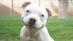 ♥PIC♥ 5 pictures that make you smile - Google Search