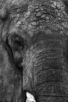 Details of an Elephant