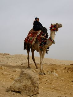 Camel (Stock Photo By ljk) [ID: 725881] - freeimages
